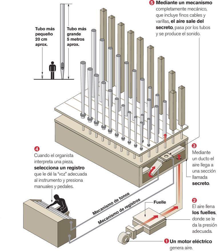 funcionamiento organo