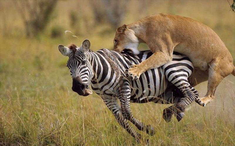 ¿Qué son los grandes depredadores?